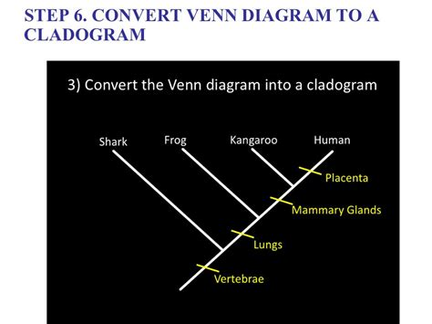 cladogram venn diagram phylogeny and classification ppt