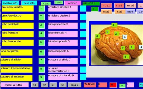 test sistema nervoso cardiochirurgia pediatrica