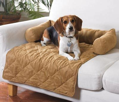 sofa saver dog 325 best images about things i want on pinterest pi beta