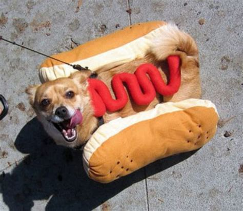 funny hot dog pic music n more funny dog photos
