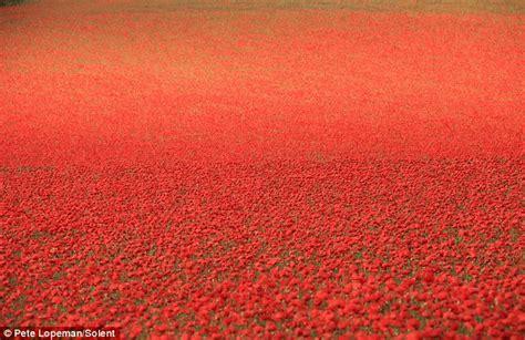 poppy explained world war i homework help for ks1 and ks2 remembrance