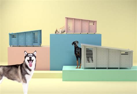 most amazing dog houses 10 of the most amazing dog friendly homes and interiors styletails