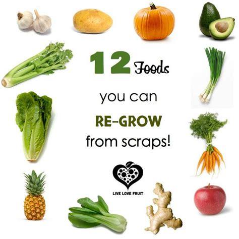 vegetables you can regrow foods you can regrow from scraps regrow vegetables