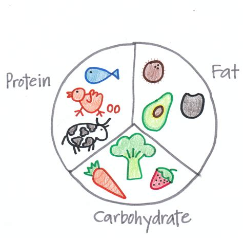 carbohydrates drawing the importance of a well balanced diet during pregnancy