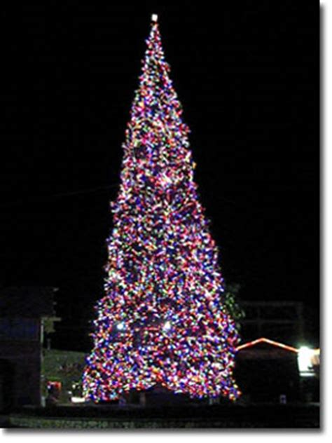 tall christmas trees up to 100 feet tall