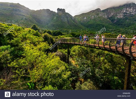 Tree Canopy Walkway Kirstenbosch National Botanical Botanical Gardens Cape Town