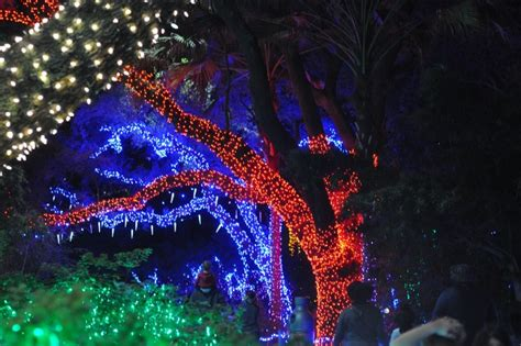 Top 7 Things To Do This Week Thanksgiving Weekend In Zoo Lights Houston 2015