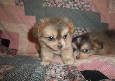mainely puppies previous puppies mainely puppies