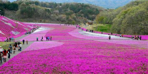 imagenes de rosas increibles los 22 paisajes m 225 s incre 237 bles del mundo
