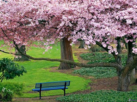panchina parco panchina nel parco livello di vita soddisfacente