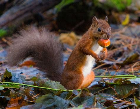 animal seasons squirrels autumn 1848358784 216 best squirrels images on squirrels adorable animals and funny animals