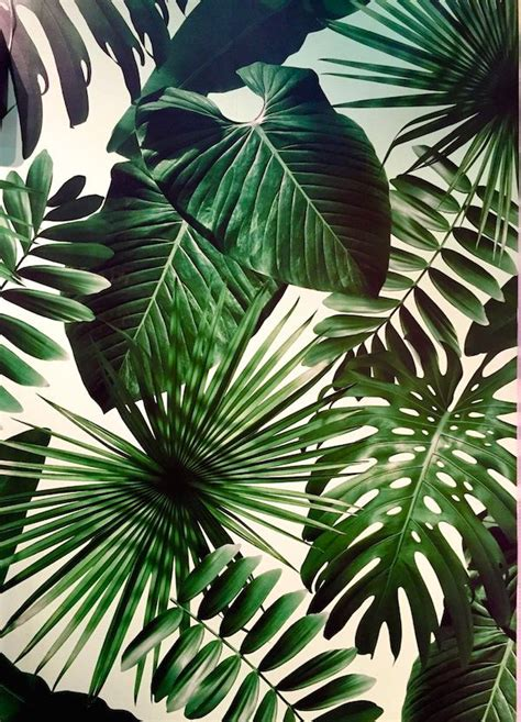 plant wallpaper the 25 best tropical wallpaper ideas on pinterest