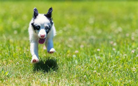 how fast do dogs run photo of a running on the gras hd animals wallpapers