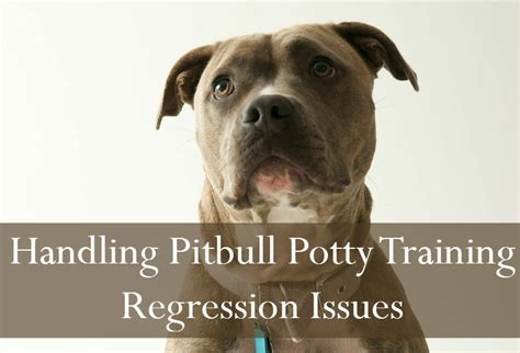 puppy potty regression pitbull puppy tips potty regression