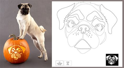 pug pumpkin stencil downloadable breed pumpkin stencils popsugar pets