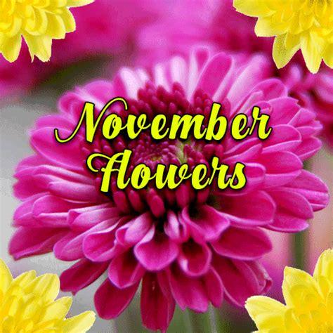 november birth november birth flower free november flowers ecards