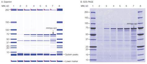 gst agarose protein analysis using the experion system lsr bio rad