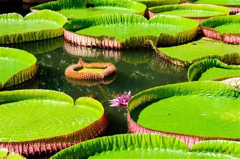 Amazonas Regenwald Pflanzen by Amazonas Regenwald Um Manaus Brasilien Franks Travelbox