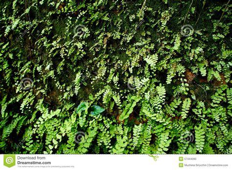 Fern Moss Wall