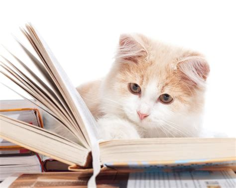 cat picture book the purr fect book for cat