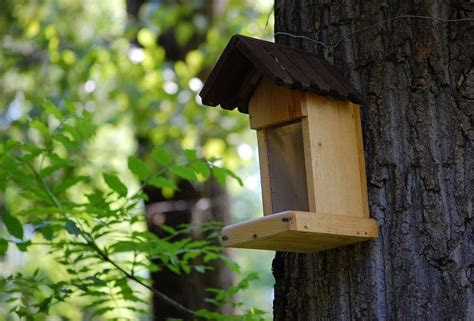 bird house in a tree alegri free photos highres