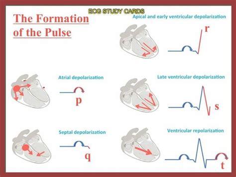 pattern formation heart p qrs t waves nursing cardiovascular ekg ecg