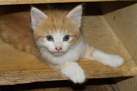 imagenes tiernas gatos imagenes tiernas y curiosas de gatos imagenes frases