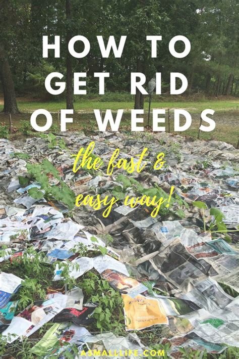 how to get rid of weeds the fast and easy way a small life