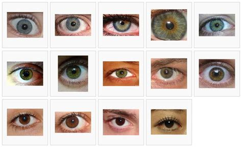 green eye color green eye color chart eye color chart different