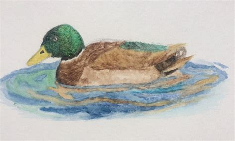 watercolor wood duck by manicmagician on deviantart watercolor duck by seakliff on deviantart