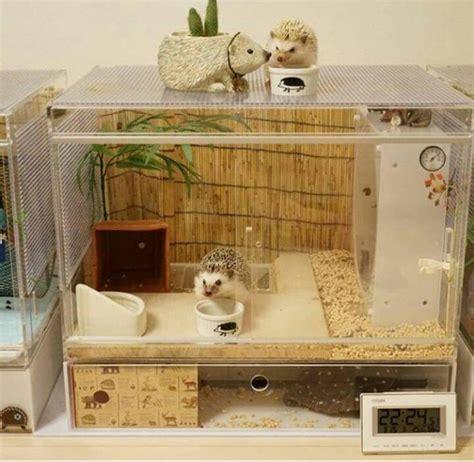 gabbie per ricci 17 migliori idee su gabbia di riccio su gabbie