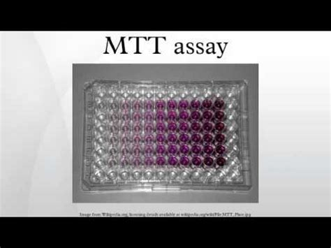 mtt test dojindo cck 8 assay vs mtt assay