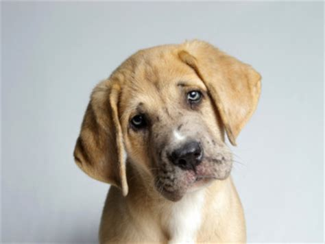 places to adopt dogs top places to adopt a pet in las vegas 171 cbs las vegas