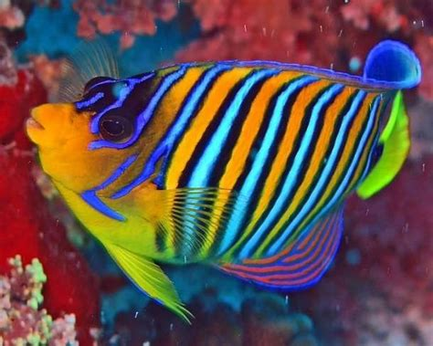 colorful saltwater fish fish on