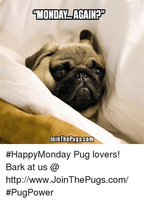 pug bark pugs memes of 2016 on sizzle cars