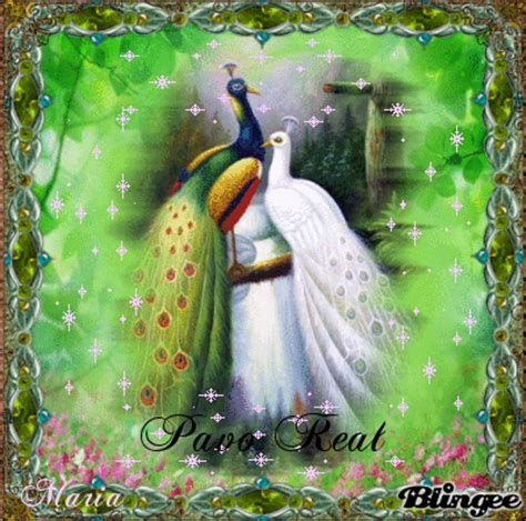 imagenes reales de un basilisco pavo real fotograf 237 a 90487287 blingee com