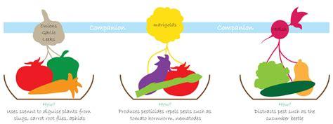 Companion Planting Ideas and Benefits   Garden365