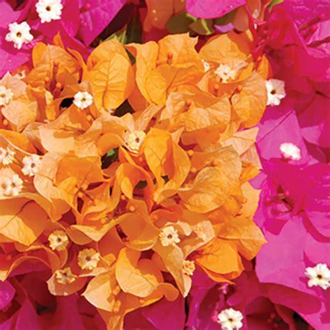four flower pairings for a balanced garden naples illustrated