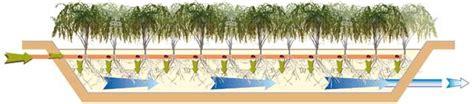 vasca fitodepurazione impianto di fitodepurazione