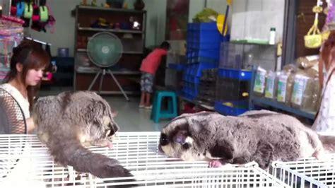 pet section bangkok exotic pets at chatuchak weekend market jj market