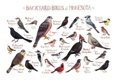minnesota backyard birds field guide print watercolor