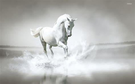 wallpaper hd horse white horse wallpapers wallpaper cave