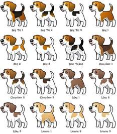 beagle colors beagle coloring variations gt gt my s beagle peanut