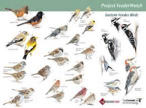 birdsleuth resources cornell lab of ornithology