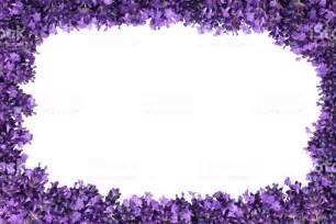 lavender flower border isolated stock photo 482763593 istock