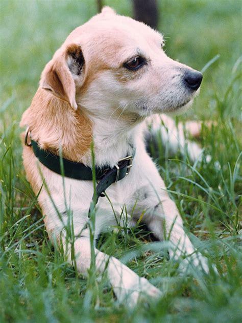 cani piccolissimi da appartamento cani piccolissimi da appartamento comorg net for