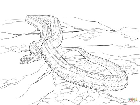garter snake coloring page corn snake coloring sheets coloring pages