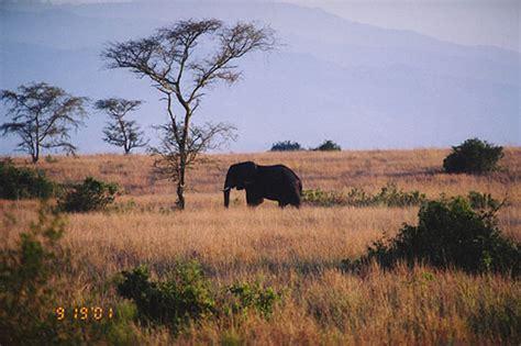 queen elizabeth national park uganda queen elizabeth national park queen elizabeth national park uganda travel photos by