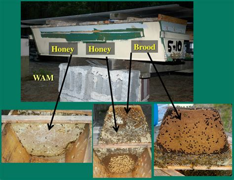 top bar hive queen excluder opening hives 200 top bar hives the low cost
