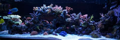 Live Rock Aquascape Designs by Let S See Those 125 Gallon Aquascapes Reef Central